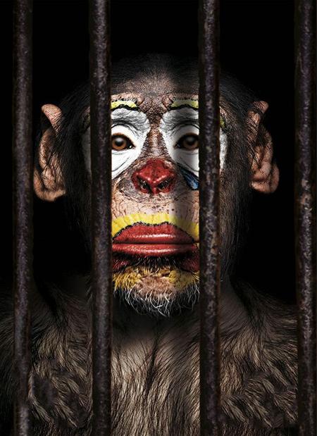 جایگاه اخلاقی (Moral Standing) مدخلی در فلسفهی اخلاق است که در بحثهایی مثل حقوق حیوانات و اخلاق پزشکی کاربر زیادی دارد. اینجا مسئله این است که در هر نظام اخلاقی، برخی چیزها صاحب جایگاه اخلاقیاند و هرگونه آسیبزدن به آنها غیراخلاقی محسوب میشود. نظام اخلاقی انسانمحور، آزار دادن حیوانات را غیراخلاقی نمیداند، مگر هنگامی که در نهایت به ضرر انسان منجر شود. به قول محمد اصفهانی در ترانهی نان و دلقک، «که اگه اینو بدونی/ تو به دلقک نمیخندی»